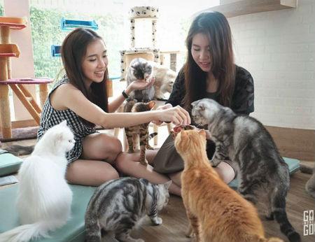 10 quán cà phê thú cưng cho du khách đến Bangkok