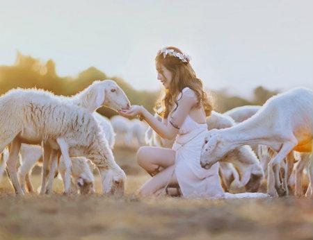 Đồng cừu Suối Nghệ - Điểm chụp hình lý tưởng tại Vũng Tàu