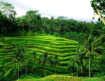 Du lịch Bali trải nghiệm những điều tuyệt vời ở Ubud