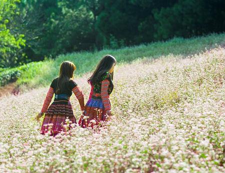 Về Mộc Châu dự Tết Độc lập, ngắm hoa tam giác mạch