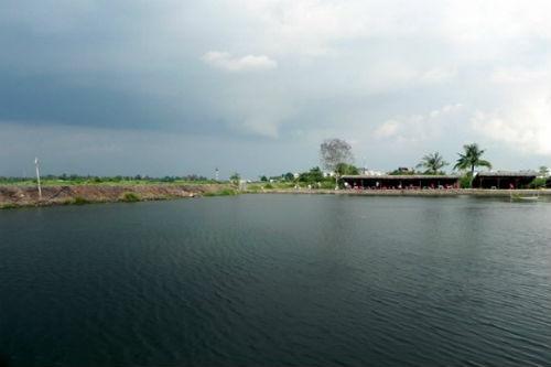 câu cá giải trí Đồng Diều quận 8