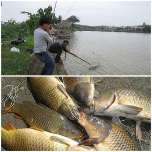 câu cá giải trí Đồng Diều Sài Gòn