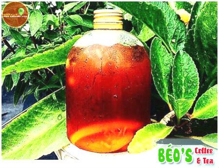 Béo's Coffee & Tea  - trà sữa ngon phong cách Béo